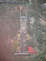 A crappy picture I took with my digital camcorder in the spring when my feeders were very busy.