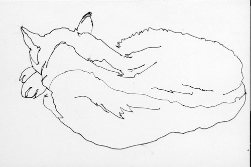 Contour Line Drawing Of A Cat : Picasso cat drawing