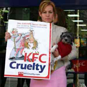 kfc animal cruelty Best answer: this brought me to tears i no longer eat at kfc i will not participate in such cruelty there is a lot of animal cruelty in this world and not very many people know about it i didn't know about it till a few years ago.