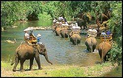 Nursery Chiang Mai