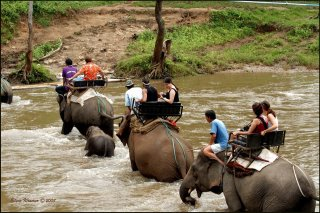 Elephant Riding Thailand