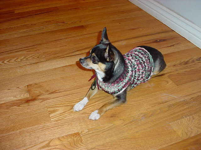 Off The Loom Knifty Knitter Chihuahua Or Small Dog Sweater