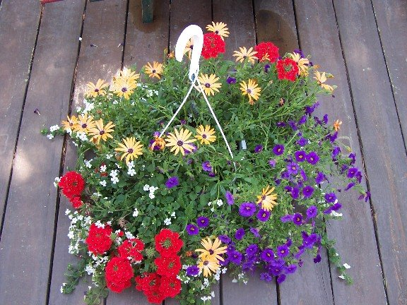 Perennial passion what should i plant in my hanging baskets this year for What should i plant in my garden