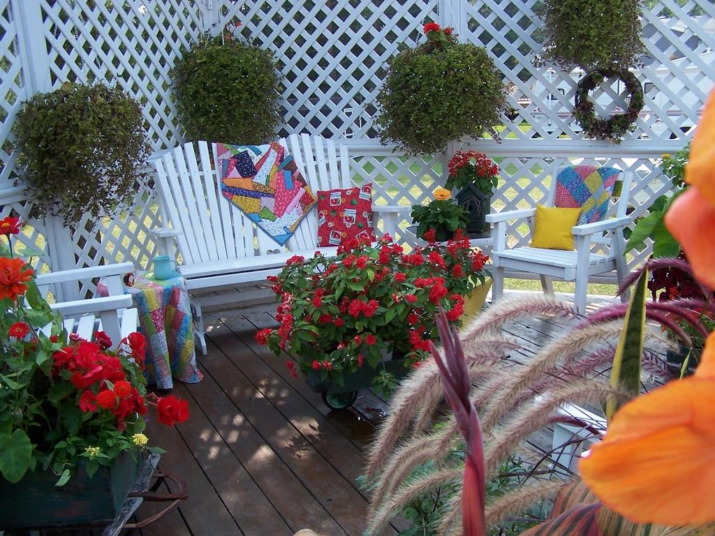 Perennial Passion What Should I Plant In My Hanging Baskets This Year