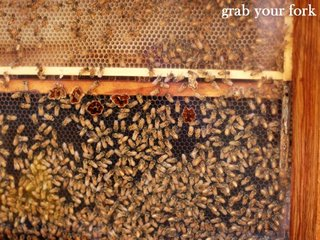 live bees