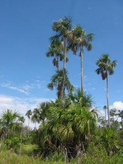 Produção de Biodiesel no Acre