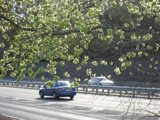 cars in spring