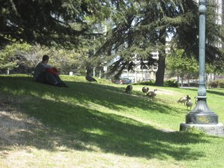 geese at lunch