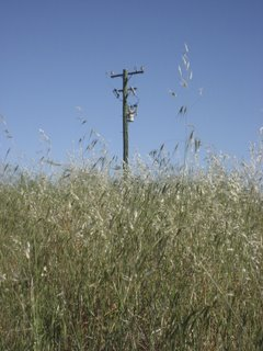 grass and telephone pole
