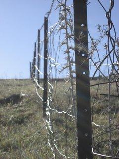 selby's fenceline