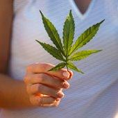 Pot Leaf