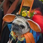 This dog needs rescue from an owner that would dress it up like this.