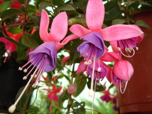 Algunas floresplantas de mi madre, ya es primavera en su jardin!!!