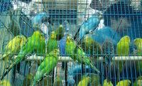 Bird Market - Kuş Pazarı