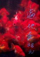 Goldfish Market - 1