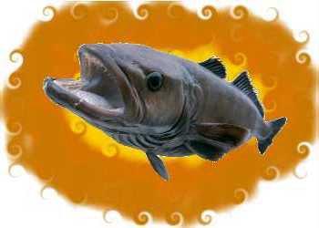 High mercury fish to avoid makan corner for Fish with high mercury
