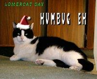 HOMERCAT HUMBUG