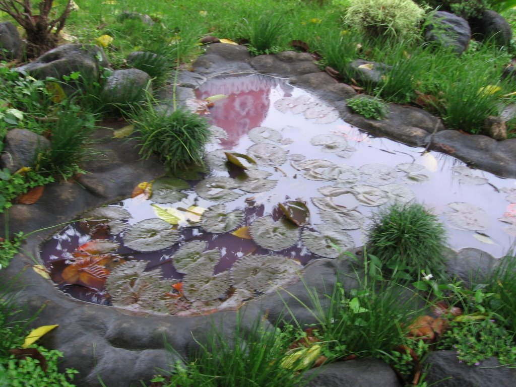 No sleep til awakening for Koi pond india