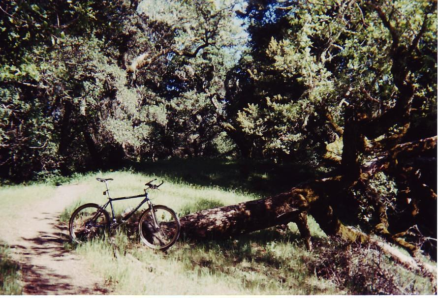 damn the trees icrybehindsunglasses - photo #23
