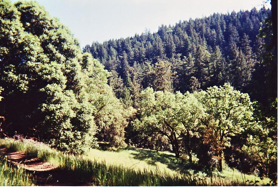 damn the trees icrybehindsunglasses - photo #16