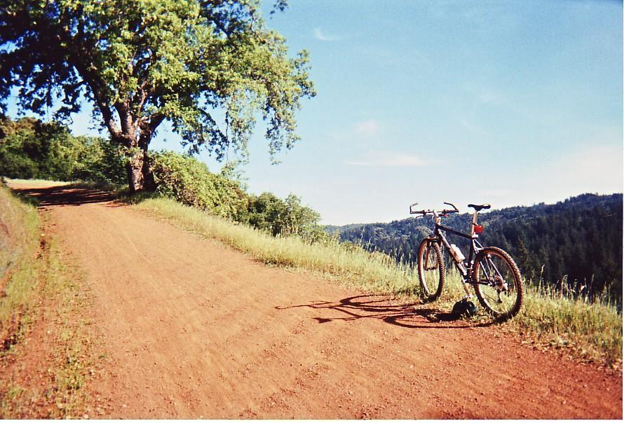 damn the trees icrybehindsunglasses - photo #33