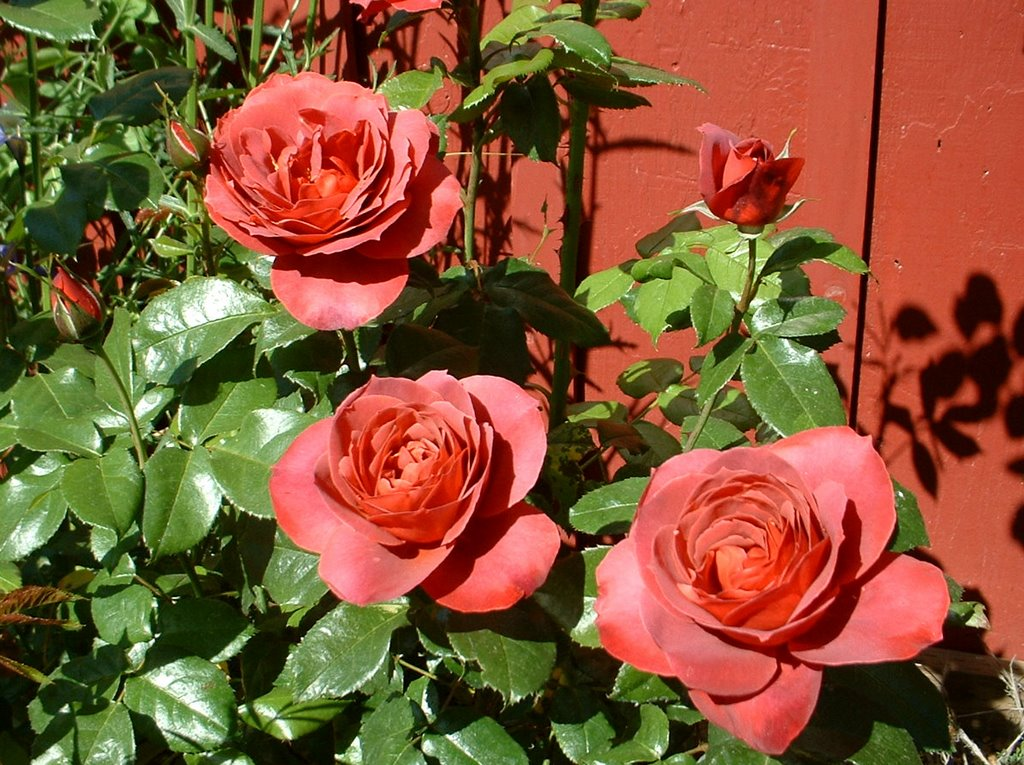 Coco Rose Nude Photos 59