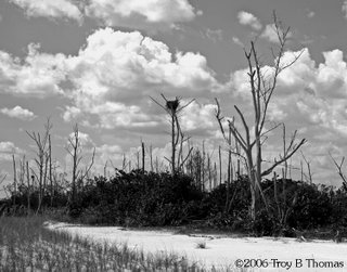Life Goes On at Lover's Key; Florida; ©2006 Photography by Troy Thomas