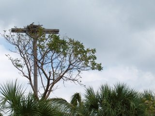 Osprey Nest, Lover's Key, Florida; Photography by Troy Thomas