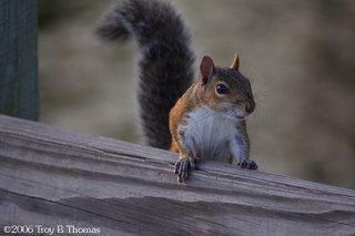 Squirrel; Lakes Park, Fort Myers, Florida; Photography by Troy Thomas