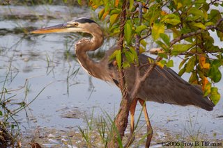 Heron; Lakes Park in Fort Myers, Florida; Photography by Troy Thomas