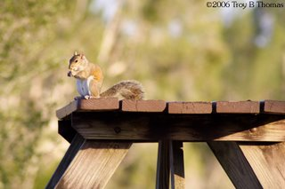 A squirrel on a picnic table at Lakes Park in Fort Myers, Florida; Photography by Troy Thomas