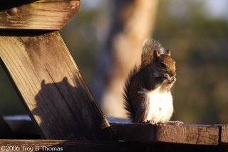 A quirrel casting a shadow on the picninc table leg at Lakes Park in Fort Myers, Florida; Photography by Troy Thomas