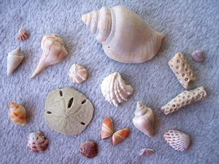 Shells from Lover's Key, Florida; Photography by Troy Thomas