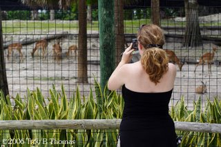 Naples Zoo, Photography by Troy Thomas