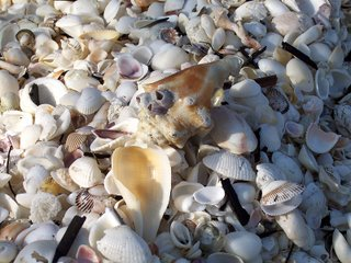 Shells of Sanibel, Florida; Photography by Troy Thomas