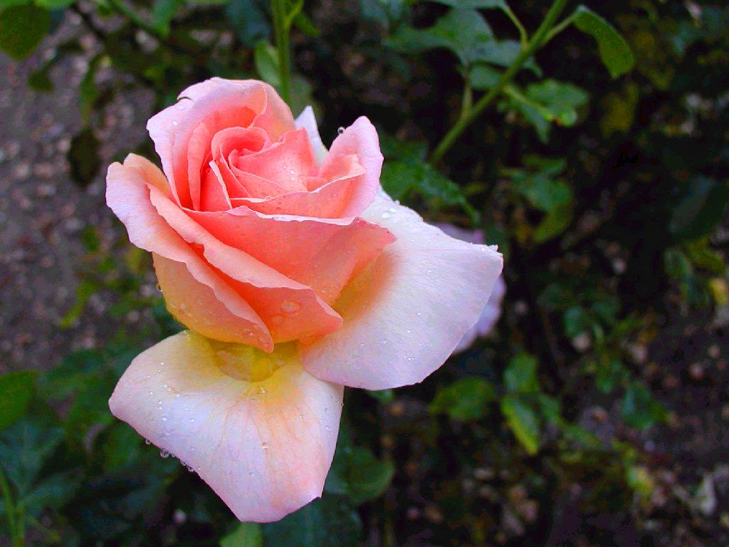 Foto fiori e piante for Piante e fiori