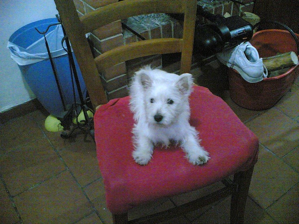 Gli arciboldi ridatemi lana quello e 39 il mio cane - Cane pipi letto ...