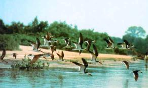 World's Largest Wetlands - Brazil's Pantanal Wetlands