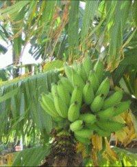 Eco - friendly alternative to paper : Banana Paper