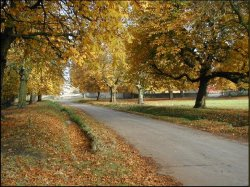 horse chestnut trees are in danger