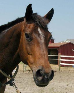 horse portrait by Lori Levin