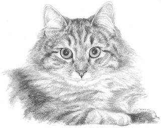 cat portrait by Lori Levin