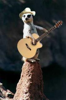 Musical Meerkats are cool.