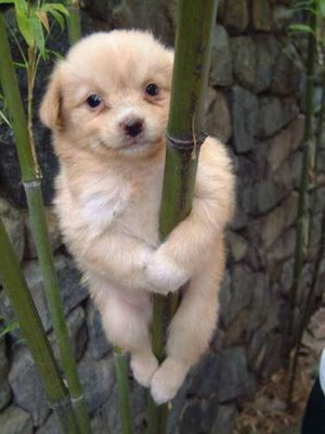 Funny Picture - Acrobatic Climber Puppy