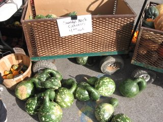union square greenmarketswan's neck gourds union square greenmarket