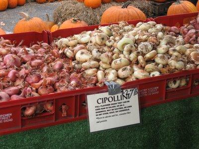 cipollini onions union square greenmarket