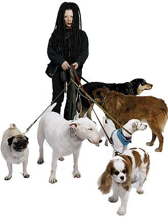 How To Find A Good Dog Walker In Nyc