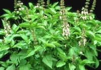 Medicina - Conozca la utilidad de cada planta en su salud