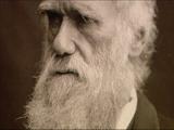 Charlie Darwin
