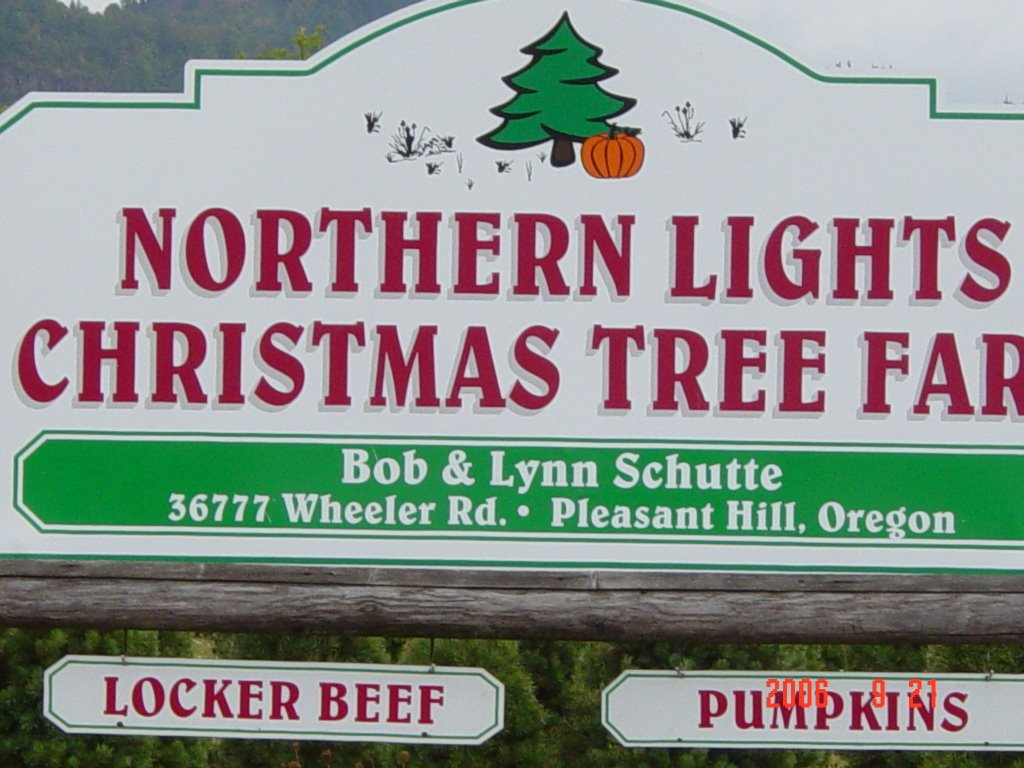 The Stumo\'s Great RV Adventure: Northern Lights Christmas Tree Farm